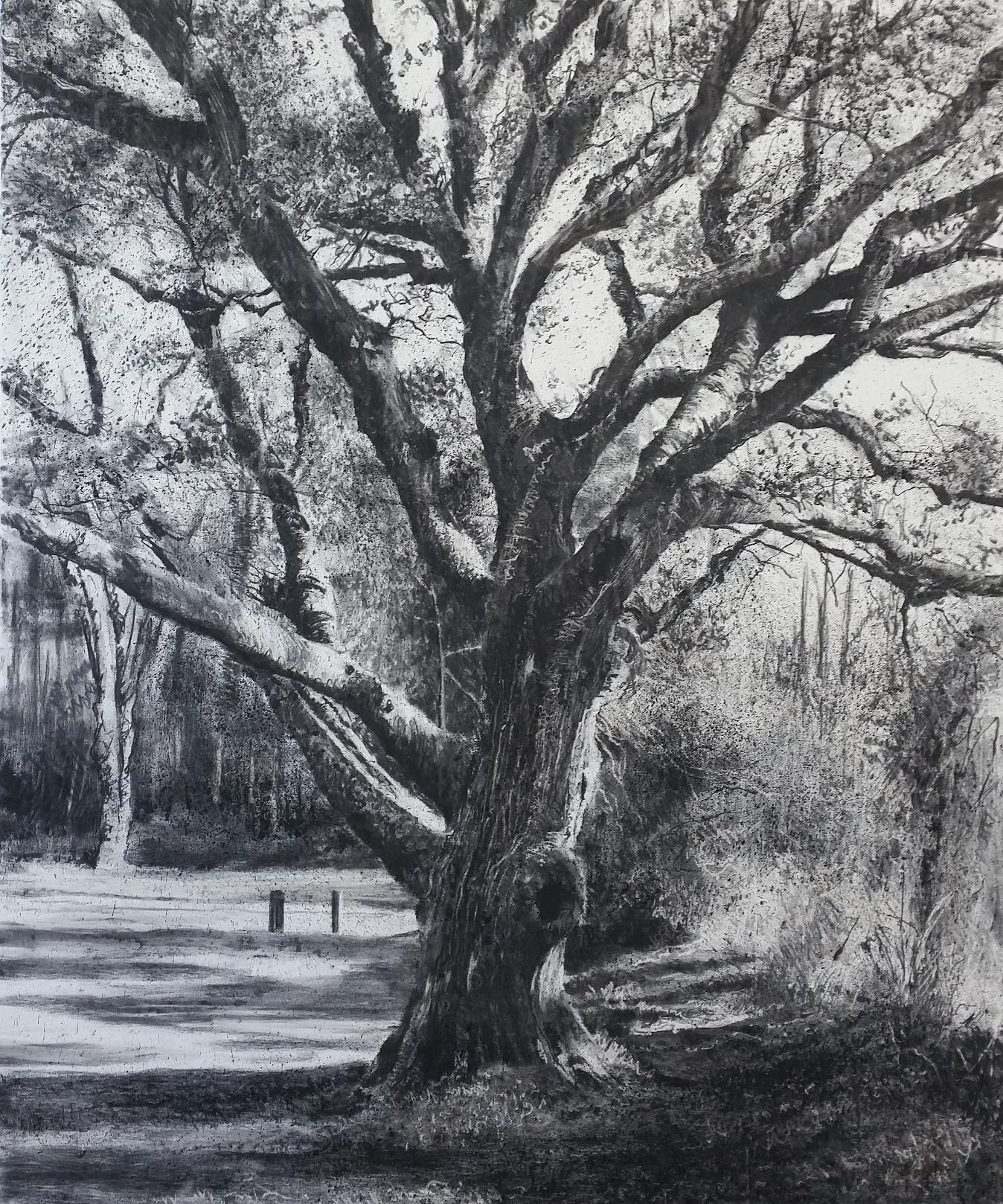 'memory tree' by Michael Wann at the chimera gallery, Mullingar, Co Westmeath, Ireland