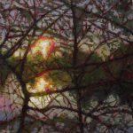 'Emergence' by Jennifer Balkan at the Chimera Gallery, Mullingar , Co Westmeath, Ireland