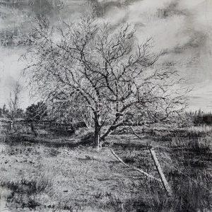 'Bog Tree' Charcoal on Canvas 90x90cm €3200