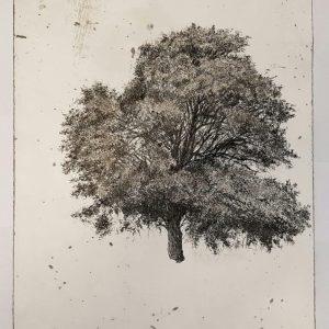 'Codex 3' Charcoal on Paper 40x30 cm €1200