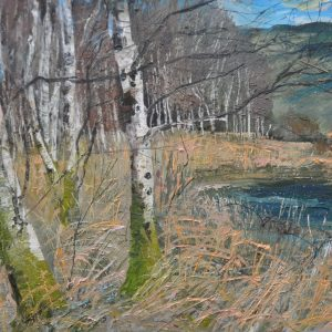 "'Birches at Coppal"" Oil on Canvas 100x90 cm"